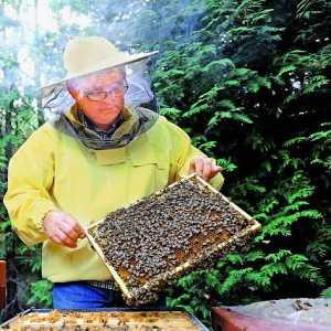 Hobby, Jakim Jest Pszczelarstwo